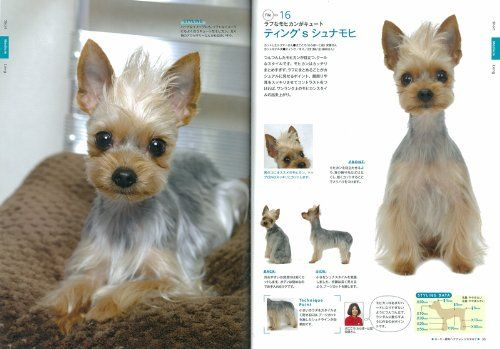 yorkie puppy cut instructions